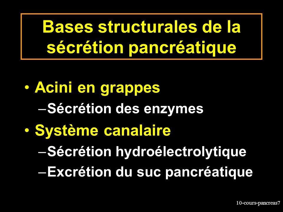 Bases structurales de la sécrétion pancréatique