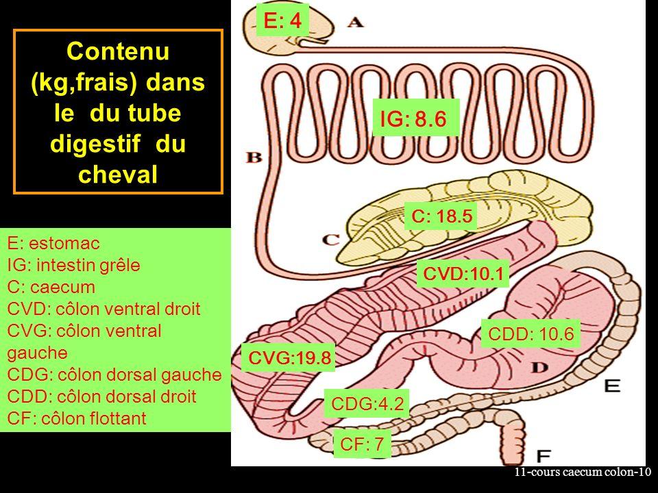 Contenu (kg,frais) dans le du tube digestif du cheval