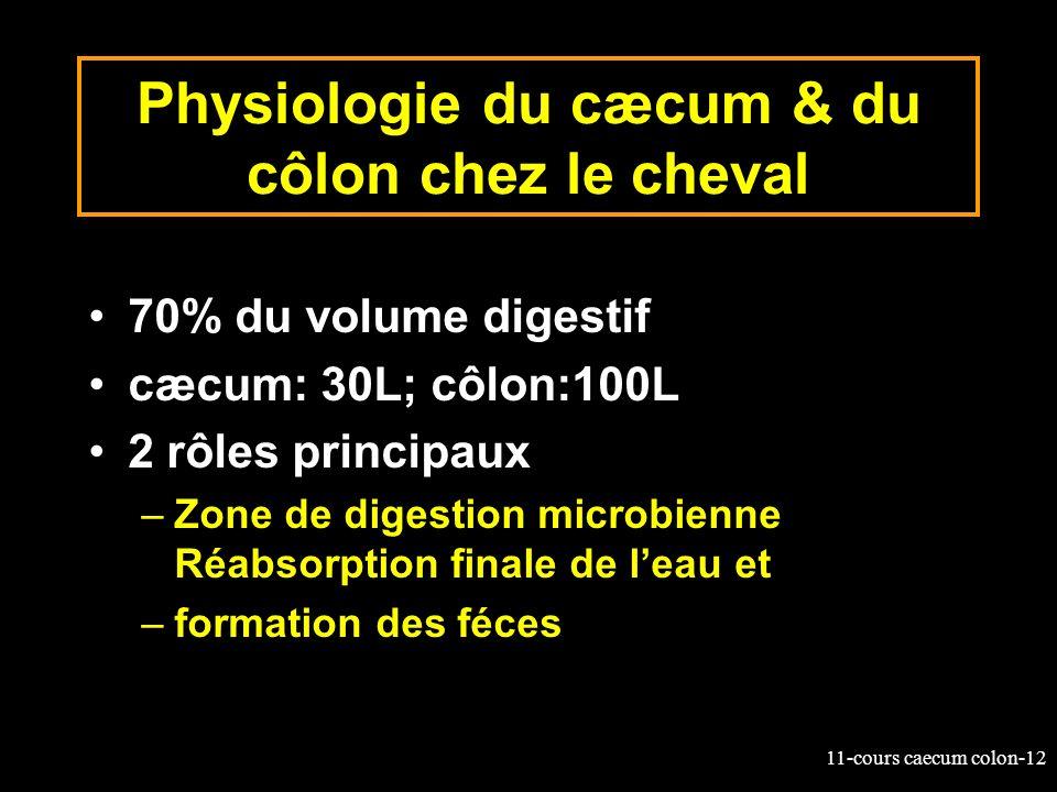 Physiologie du cæcum & du côlon chez le cheval