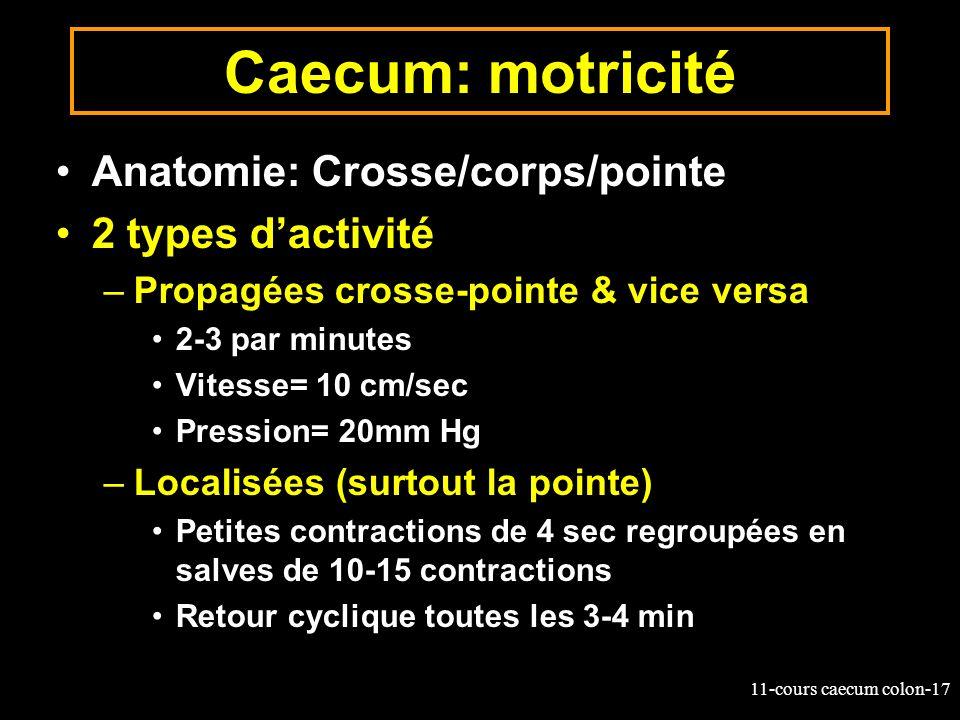 Caecum: motricité Anatomie: Crosse/corps/pointe 2 types d'activité