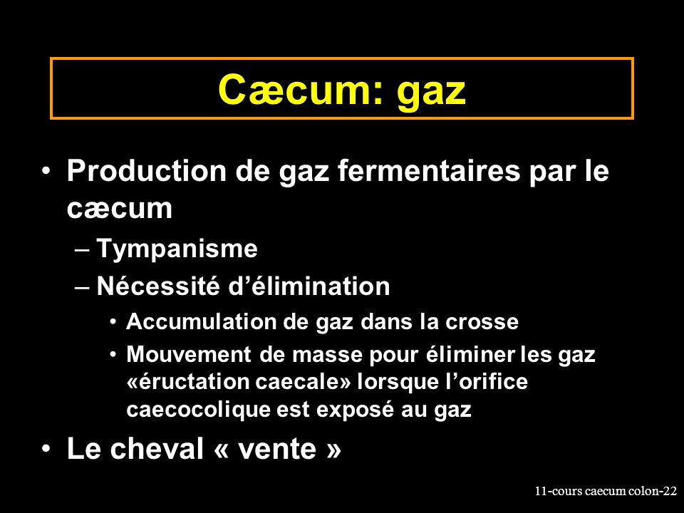 Cæcum: gaz Production de gaz fermentaires par le cæcum