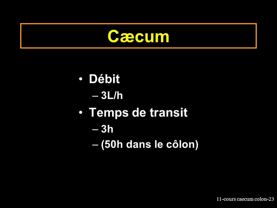 Cæcum Débit 3L/h Temps de transit 3h (50h dans le côlon)