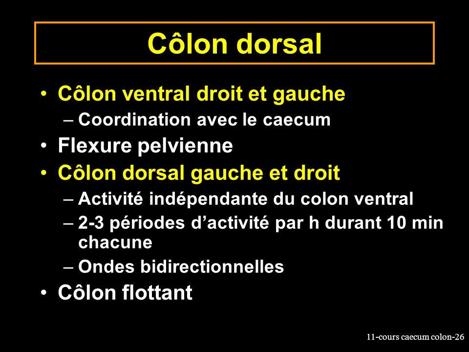 Côlon dorsal Côlon ventral droit et gauche Flexure pelvienne