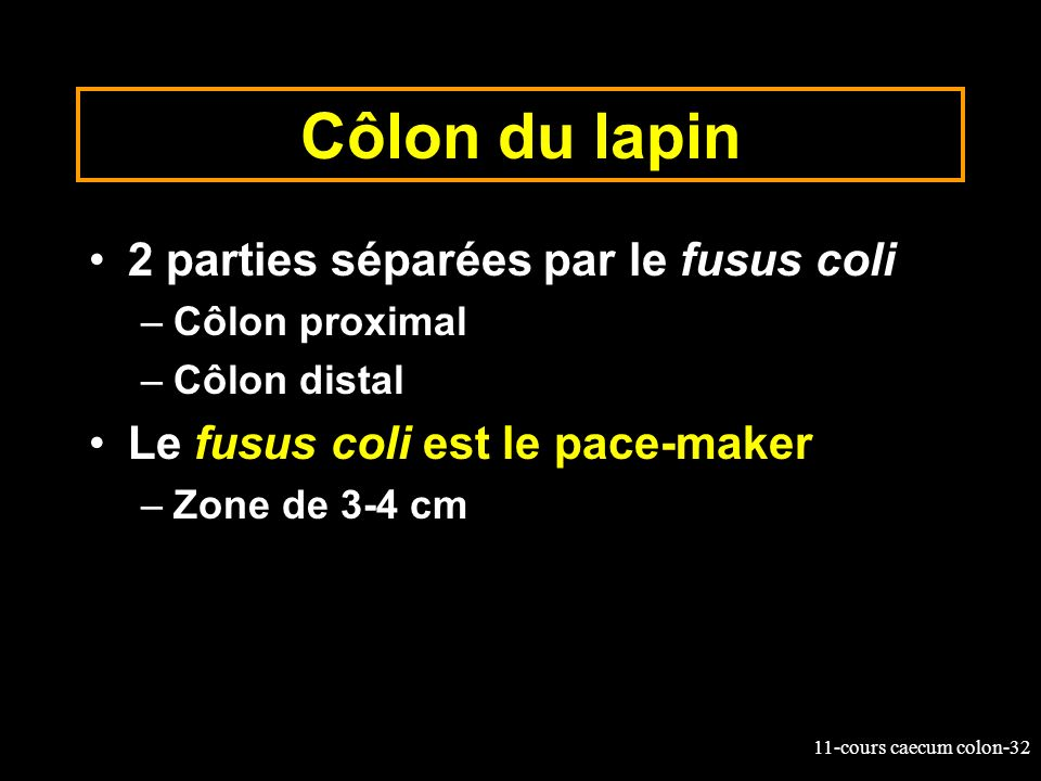 Côlon du lapin 2 parties séparées par le fusus coli