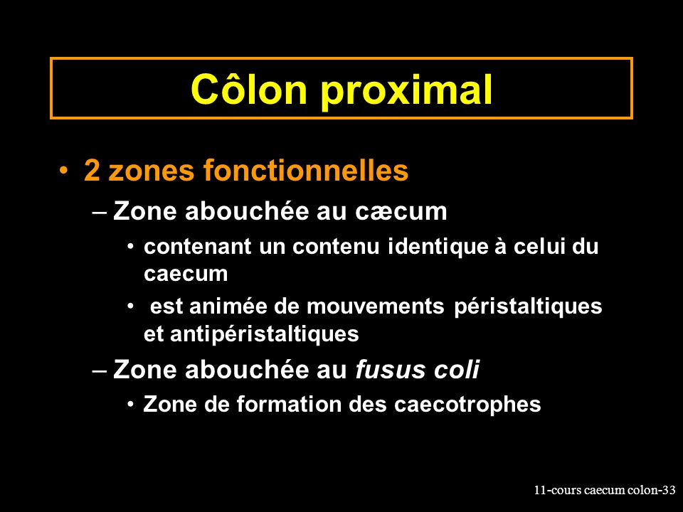 Côlon proximal 2 zones fonctionnelles Zone abouchée au cæcum