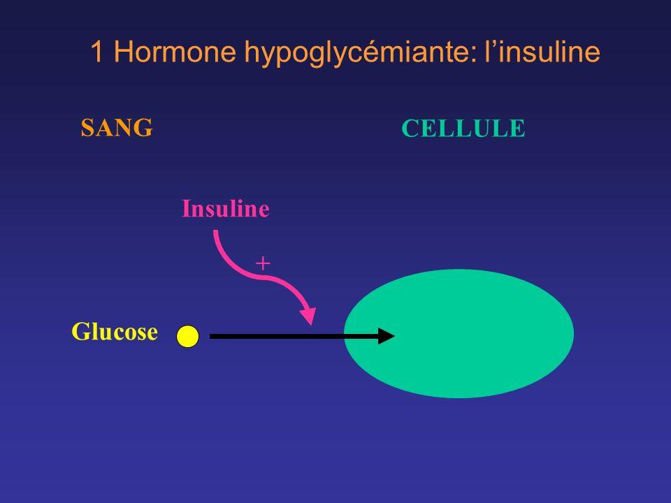 1 Hormone hypoglycémiante: l'insuline