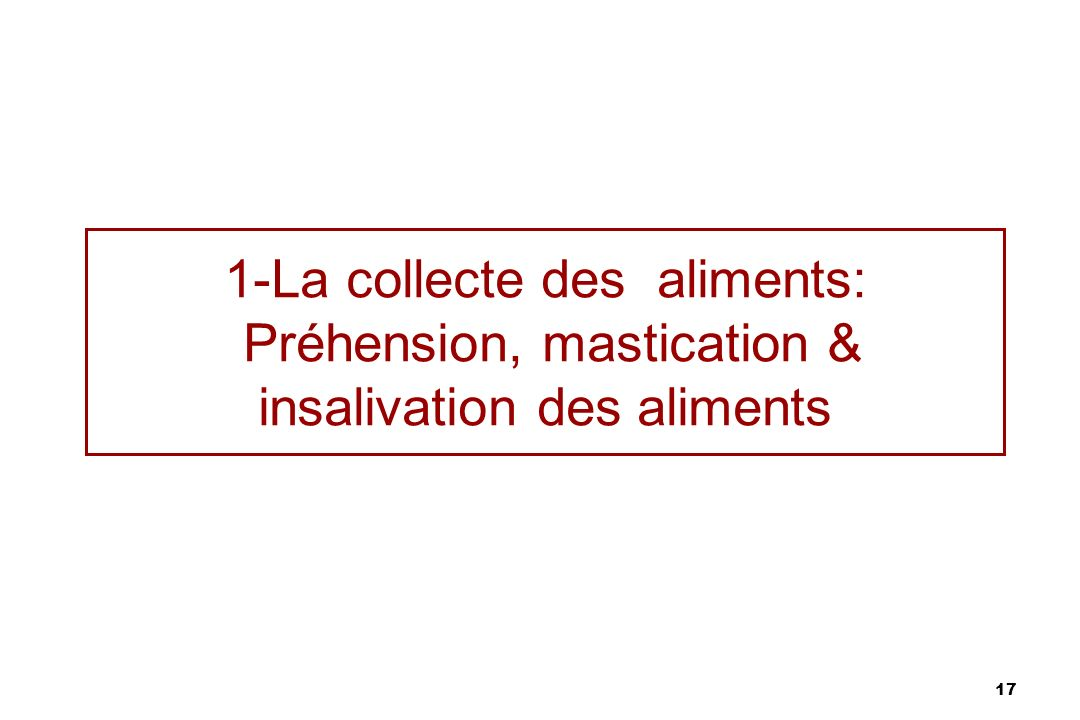 1-La collecte des aliments: Préhension, mastication & insalivation des aliments
