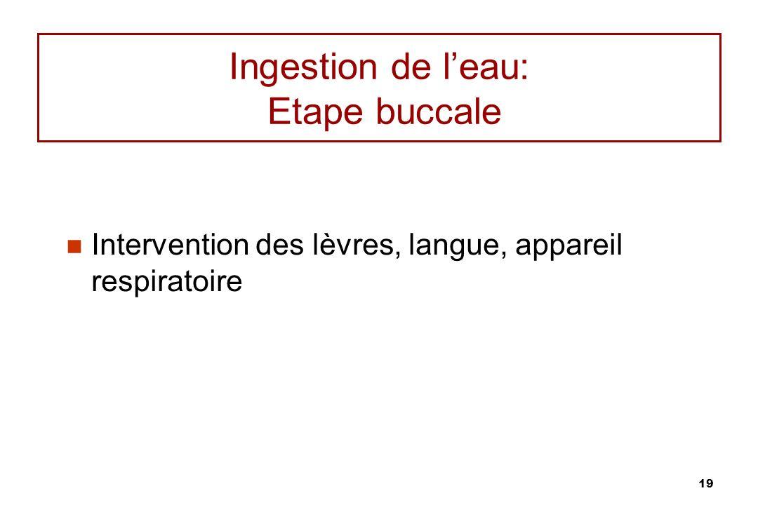 Ingestion de l'eau: Etape buccale