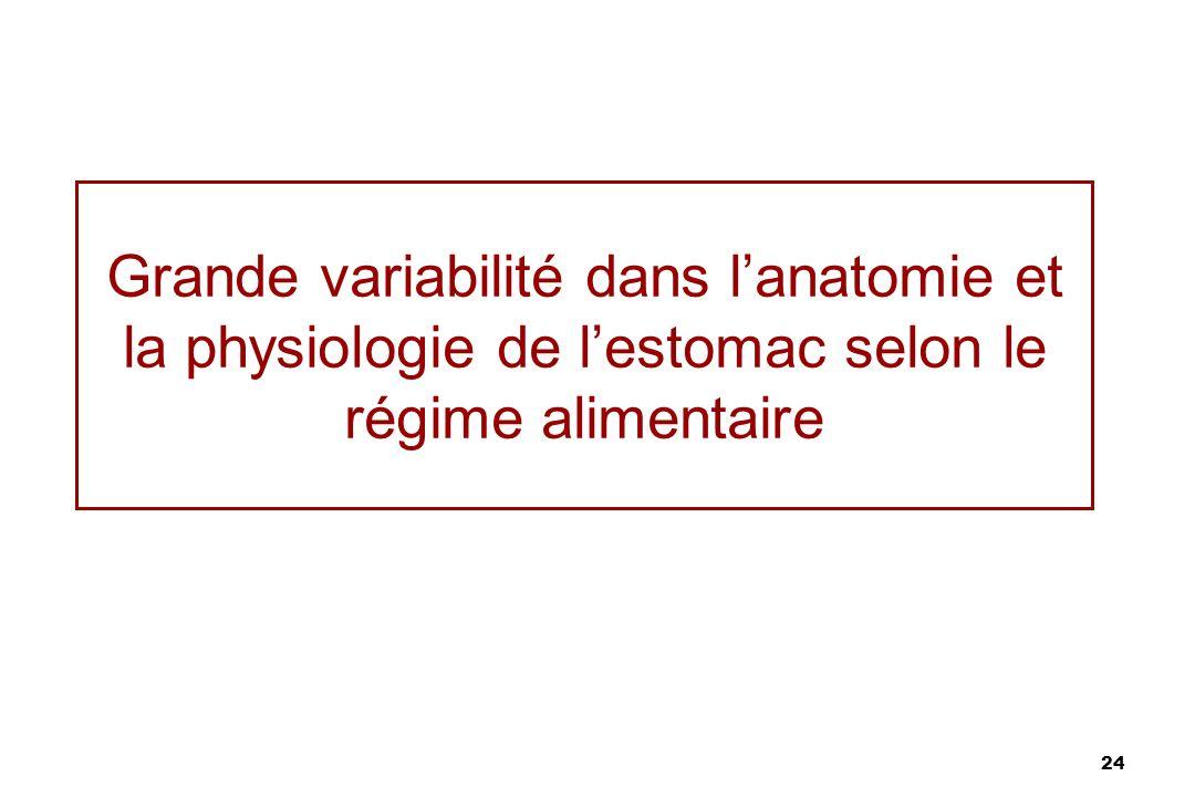 Grande variabilité dans l'anatomie et la physiologie de l'estomac selon le régime alimentaire