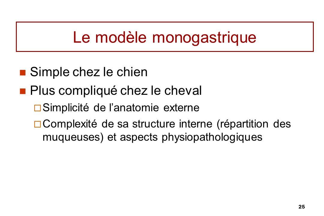Le modèle monogastrique