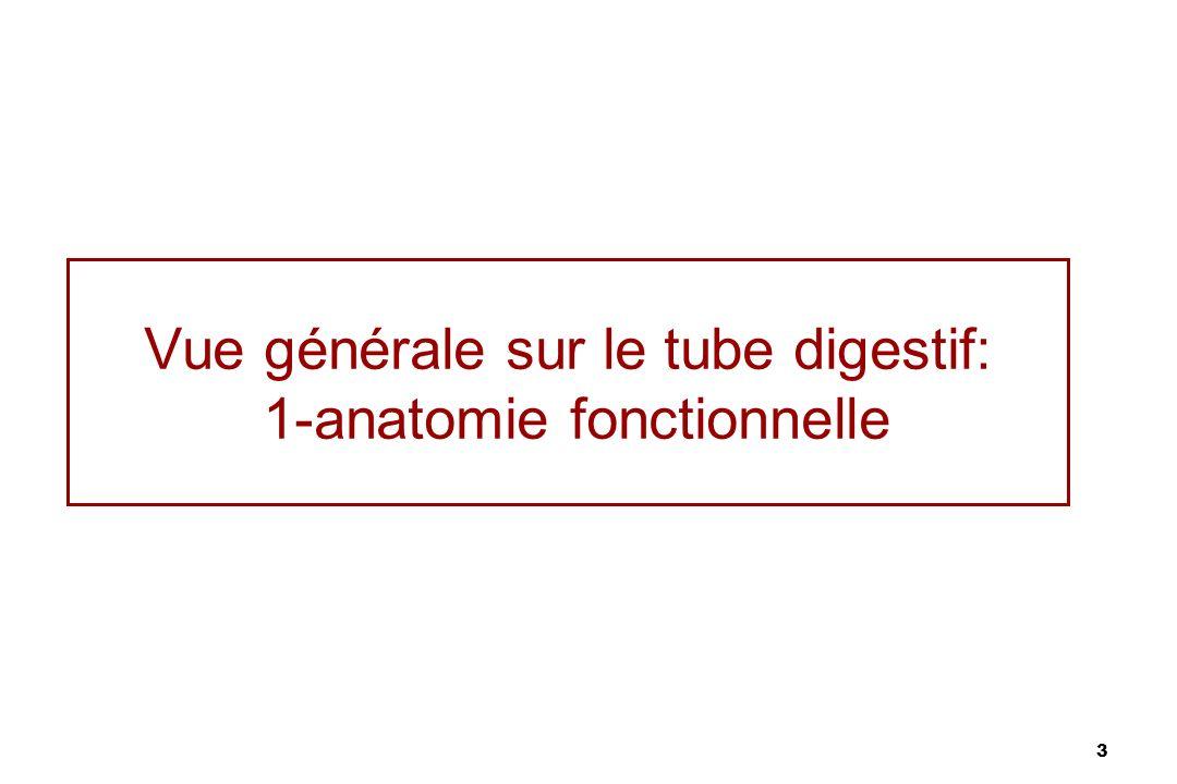 Vue générale sur le tube digestif: 1-anatomie fonctionnelle