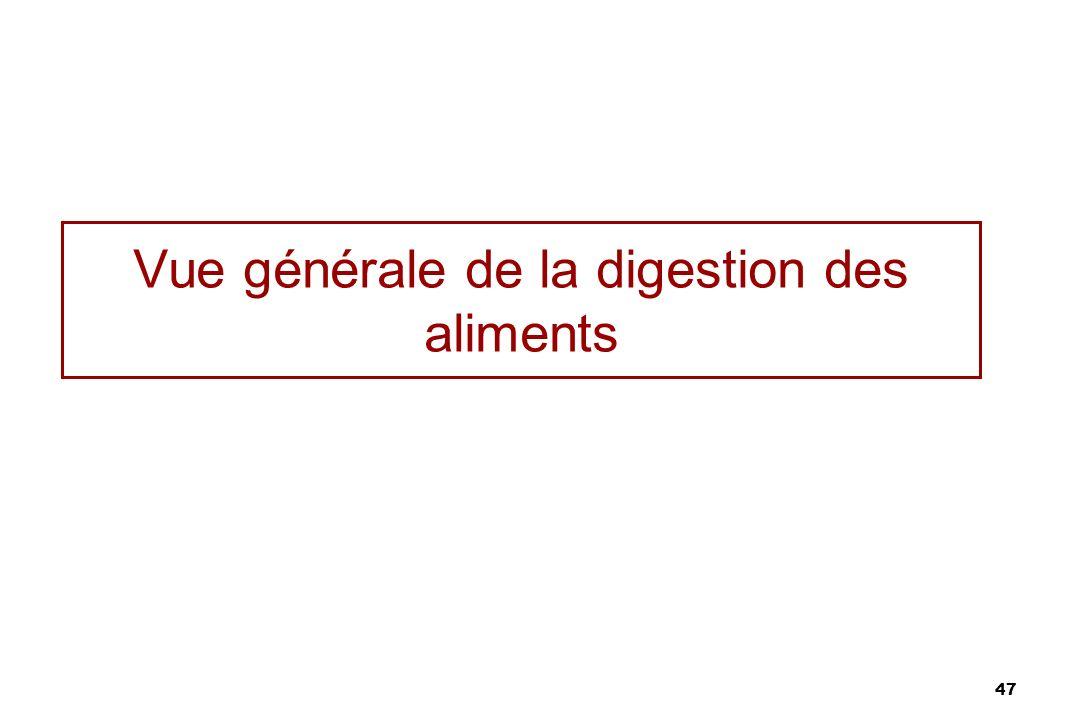 Vue générale de la digestion des aliments