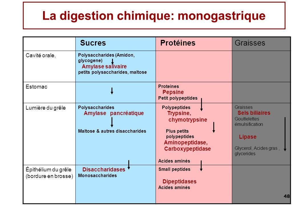 La digestion chimique: monogastrique