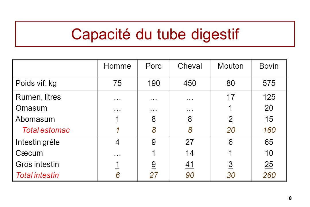 Capacité du tube digestif