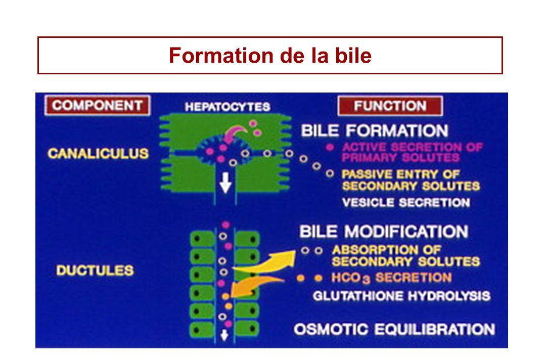 Formation de la bile