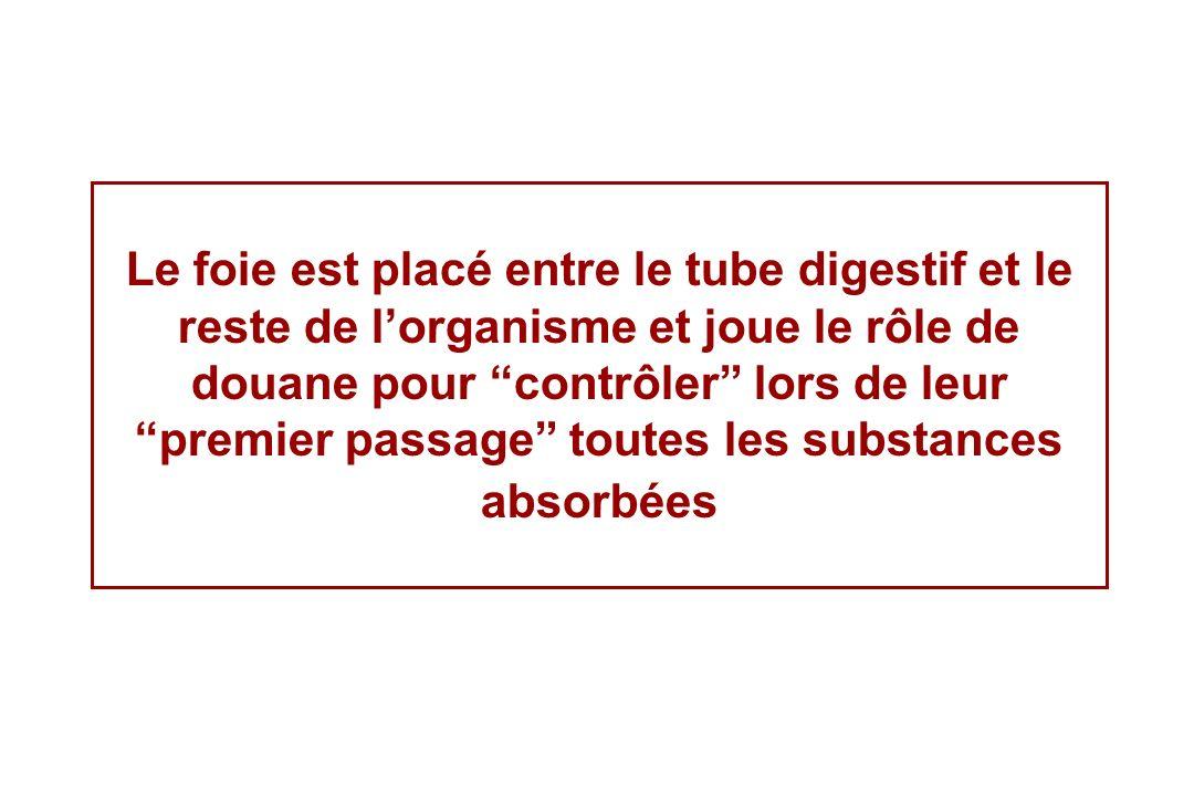 Le foie est placé entre le tube digestif et le reste de l'organisme et joue le rôle de douane pour contrôler lors de leur premier passage toutes les substances absorbées