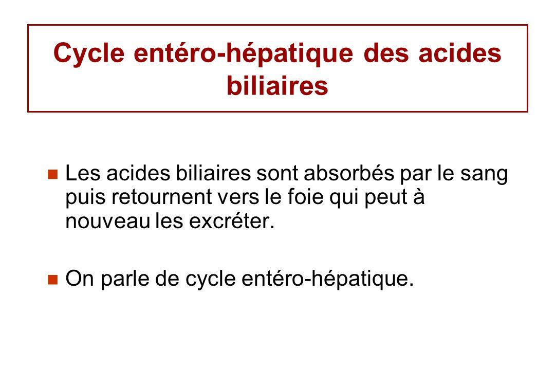 Cycle entéro-hépatique des acides biliaires