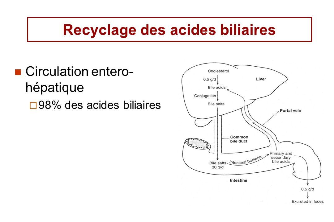 Recyclage des acides biliaires
