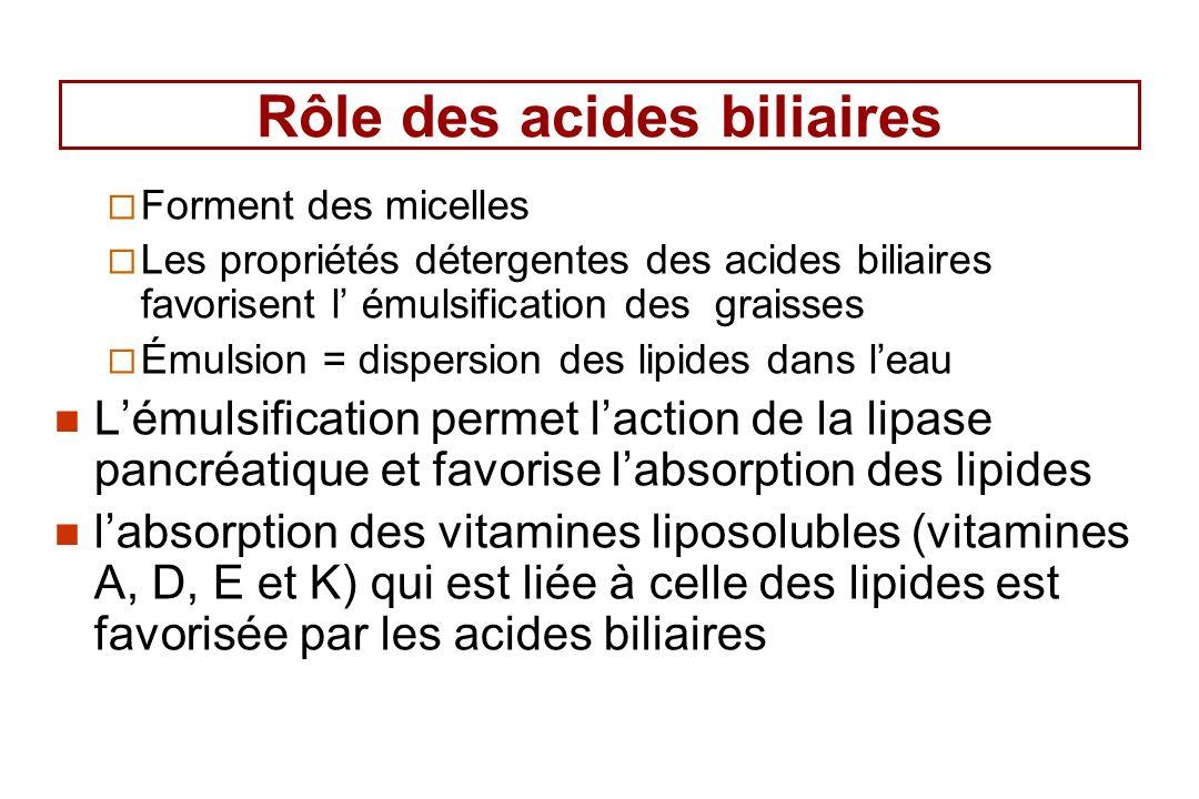Rôle des acides biliaires
