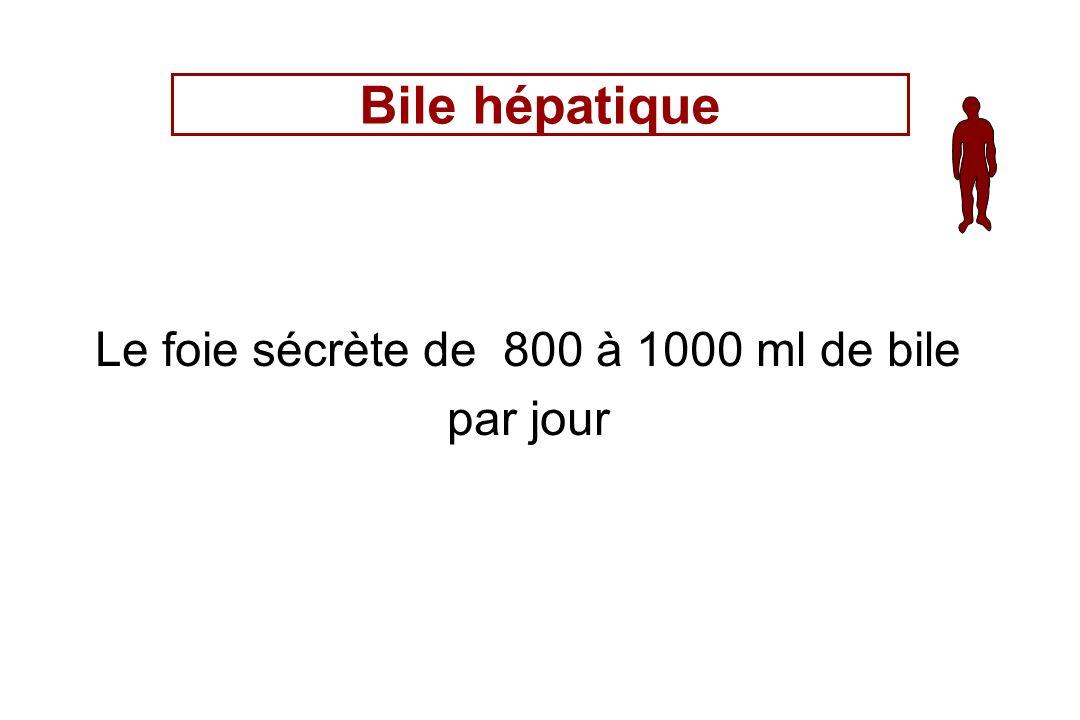 Le foie sécrète de 800 à 1000 ml de bile par jour