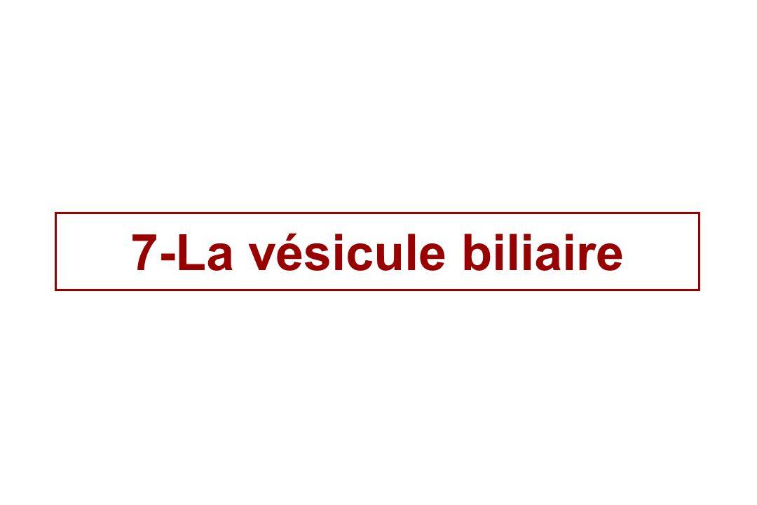 7-La vésicule biliaire