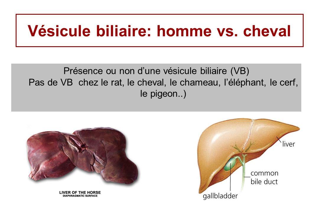 Vésicule biliaire: homme vs. cheval