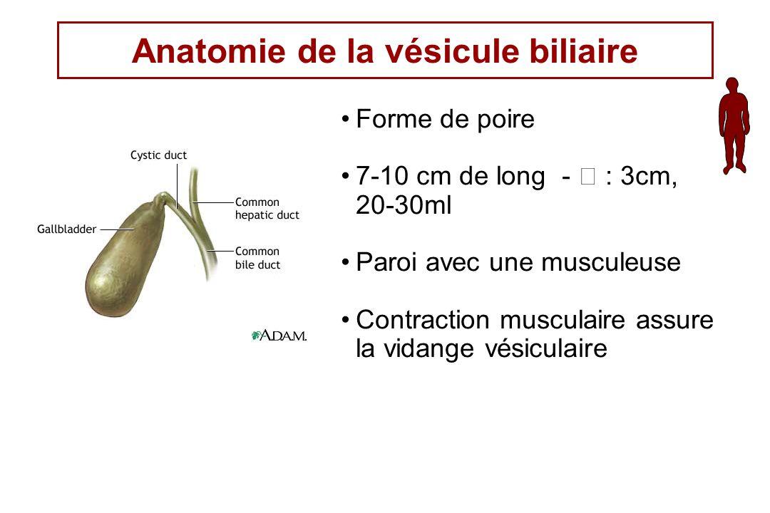 Anatomie de la vésicule biliaire