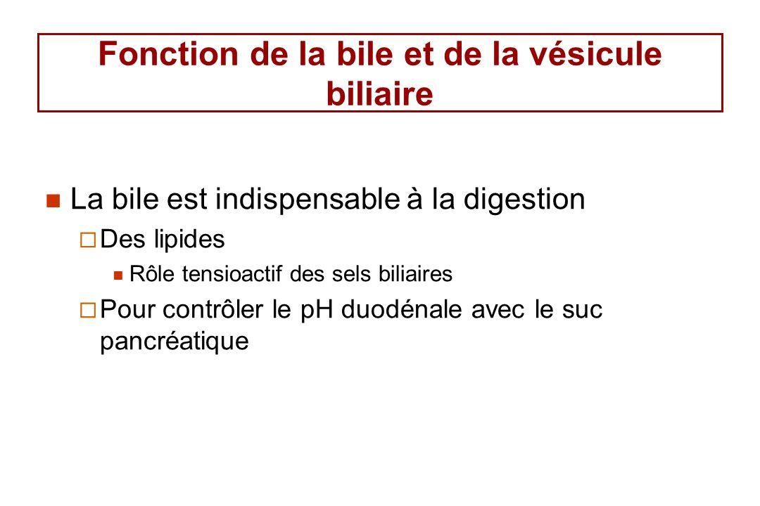 Fonction de la bile et de la vésicule biliaire