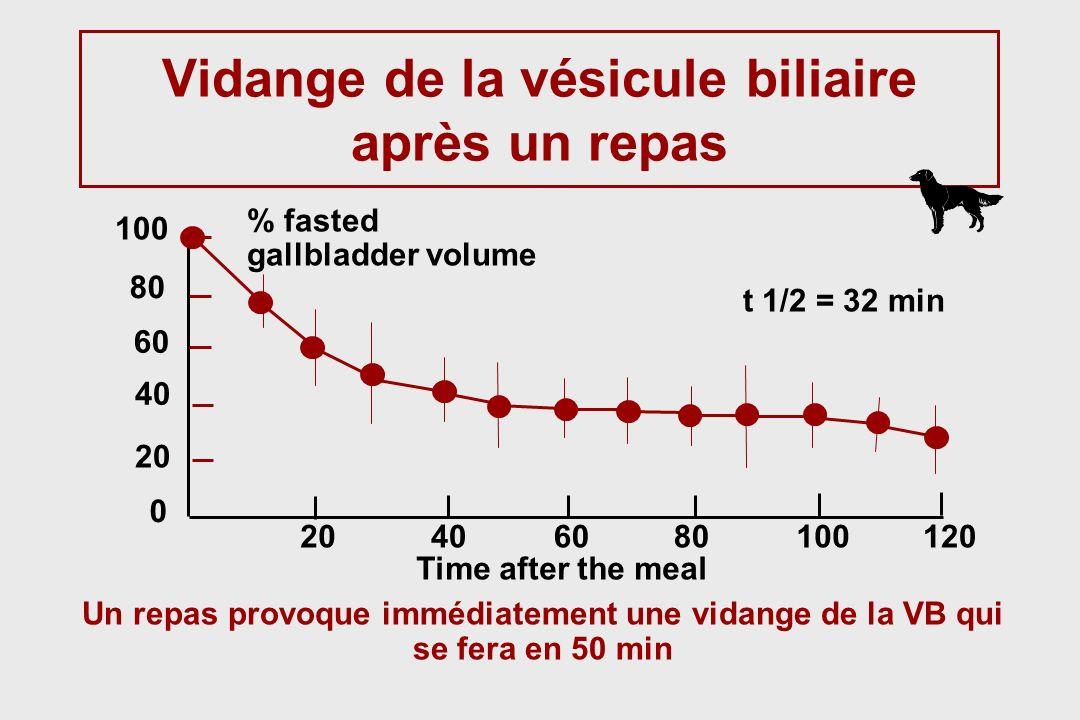 Vidange de la vésicule biliaire après un repas