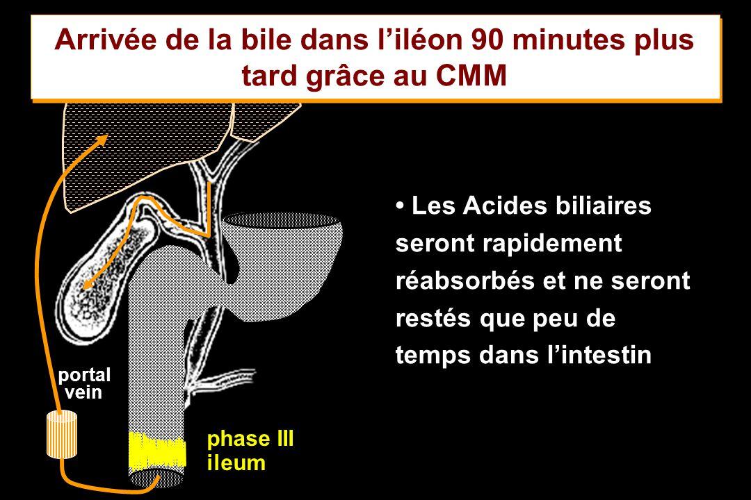 Arrivée de la bile dans l'iléon 90 minutes plus tard grâce au CMM