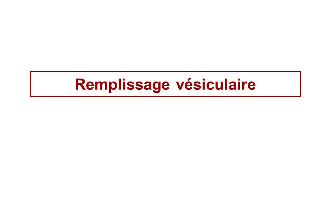 Remplissage vésiculaire