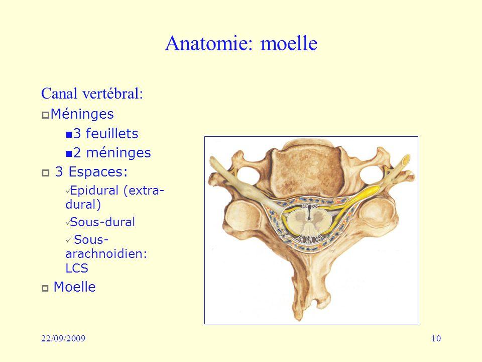 Anatomie: moelle Canal vertébral: Méninges 3 feuillets 2 méninges