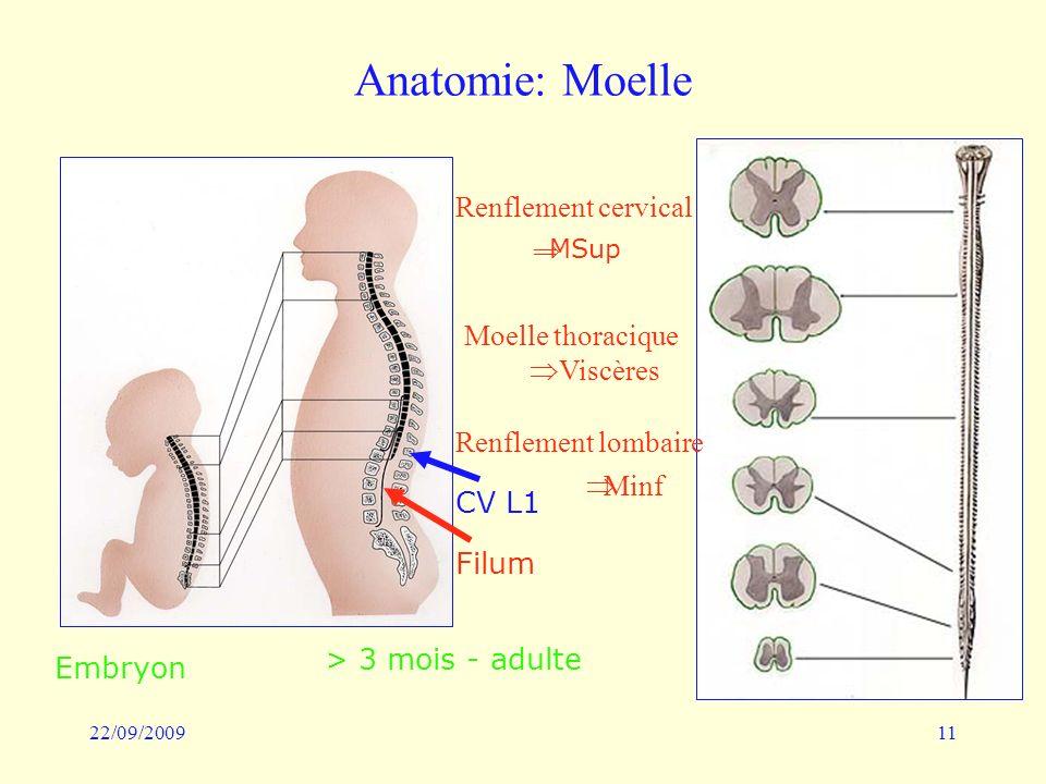 Anatomie: Moelle Renflement cervical Moelle thoracique Viscères