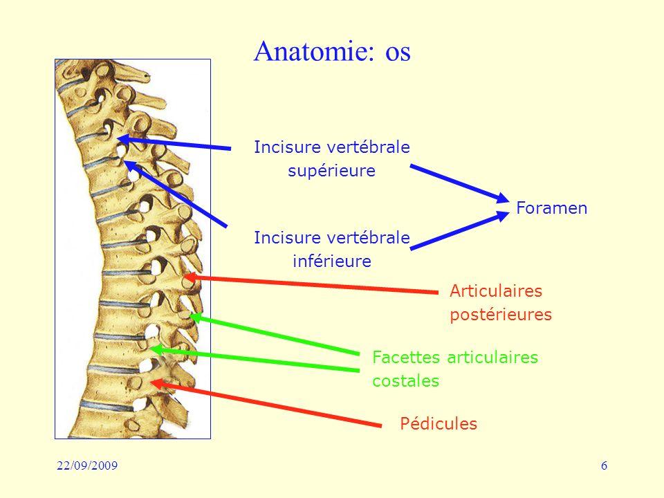 Anatomie: os Incisure vertébrale supérieure Foramen