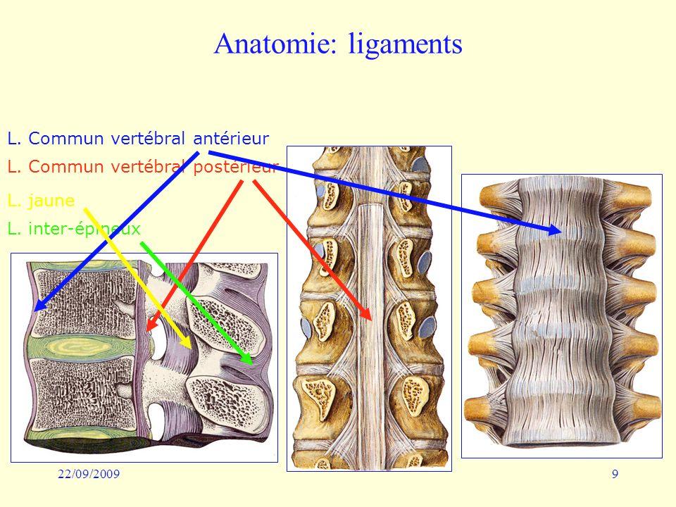 Anatomie: ligaments L. Commun vertébral antérieur