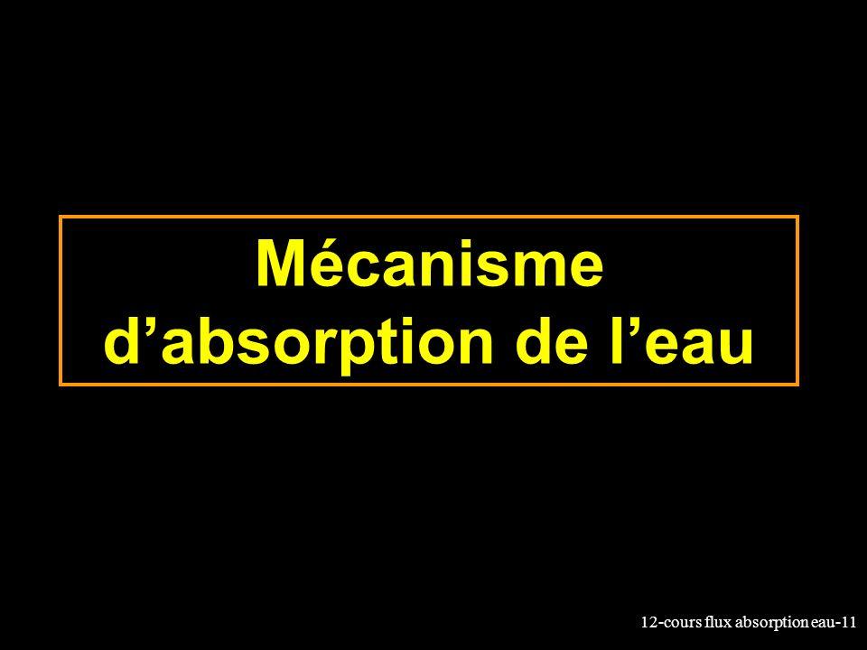 Mécanisme d'absorption de l'eau