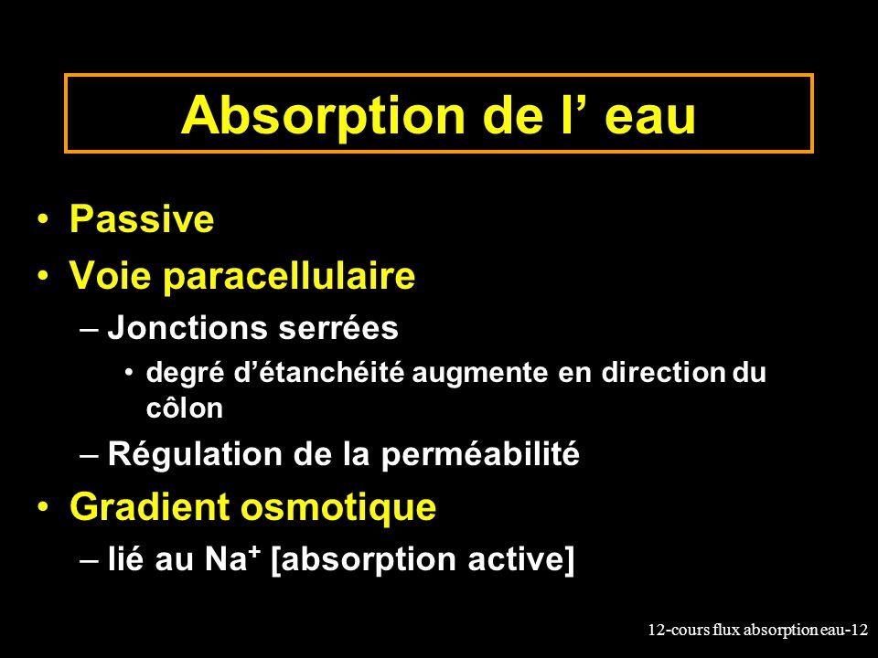 Absorption de l' eau Passive Voie paracellulaire Gradient osmotique