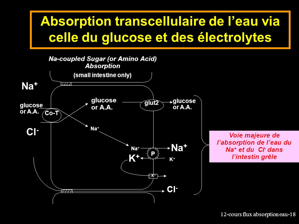 Na-coupled Sugar (or Amino Acid) Absorption
