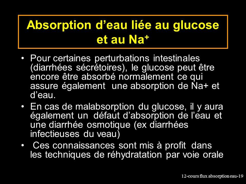 Absorption d'eau liée au glucose et au Na+