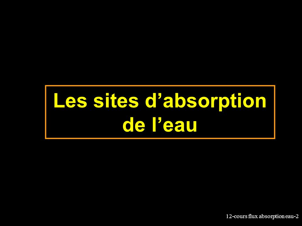 Les sites d'absorption de l'eau