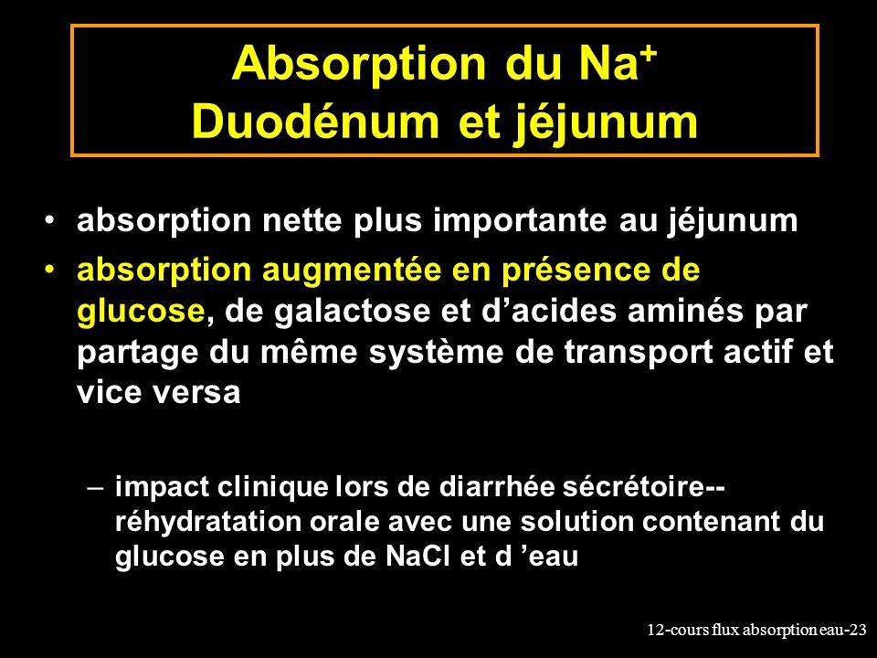 Absorption du Na+ Duodénum et jéjunum