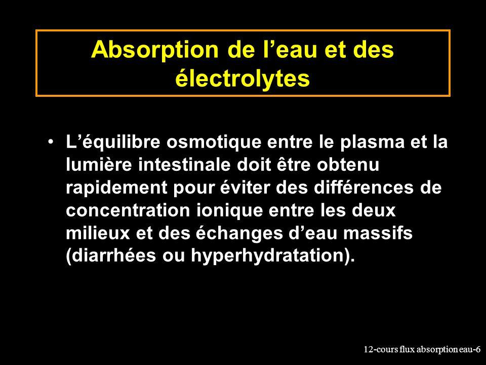 Absorption de l'eau et des électrolytes