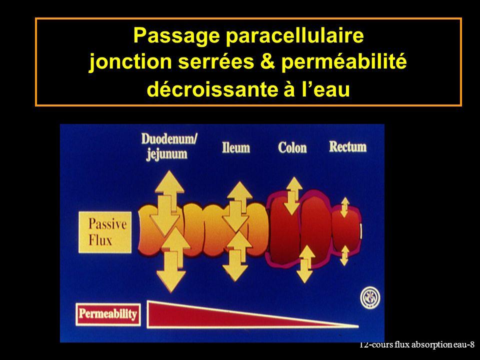 Passage paracellulaire jonction serrées & perméabilité décroissante à l'eau