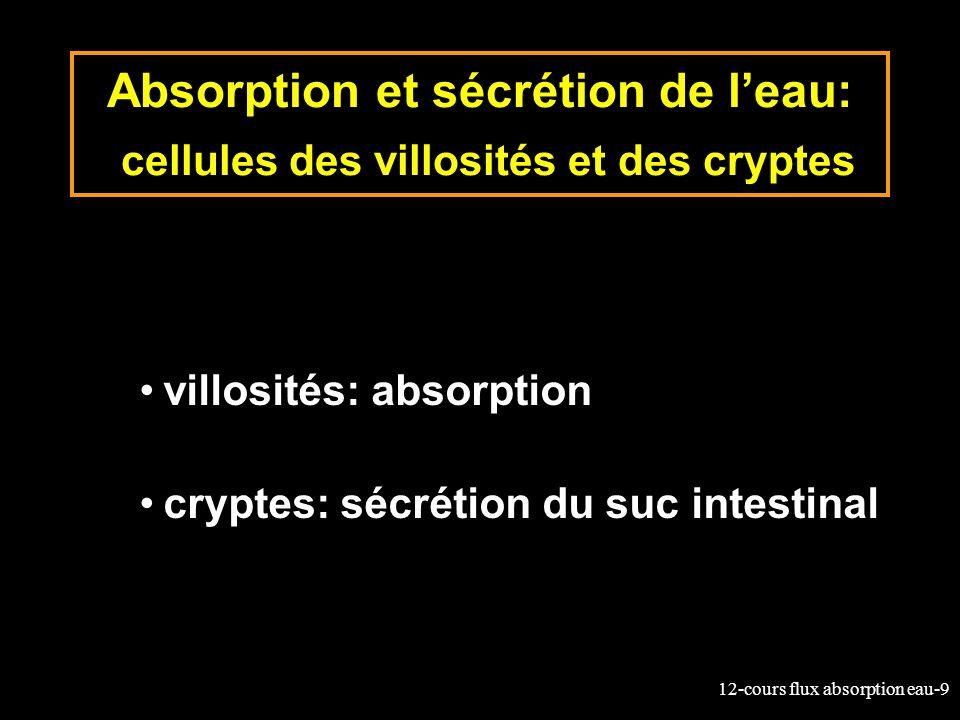 Absorption et sécrétion de l'eau: cellules des villosités et des cryptes