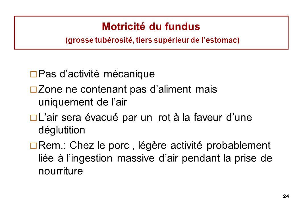 Motricité du fundus (grosse tubérosité, tiers supérieur de l'estomac)