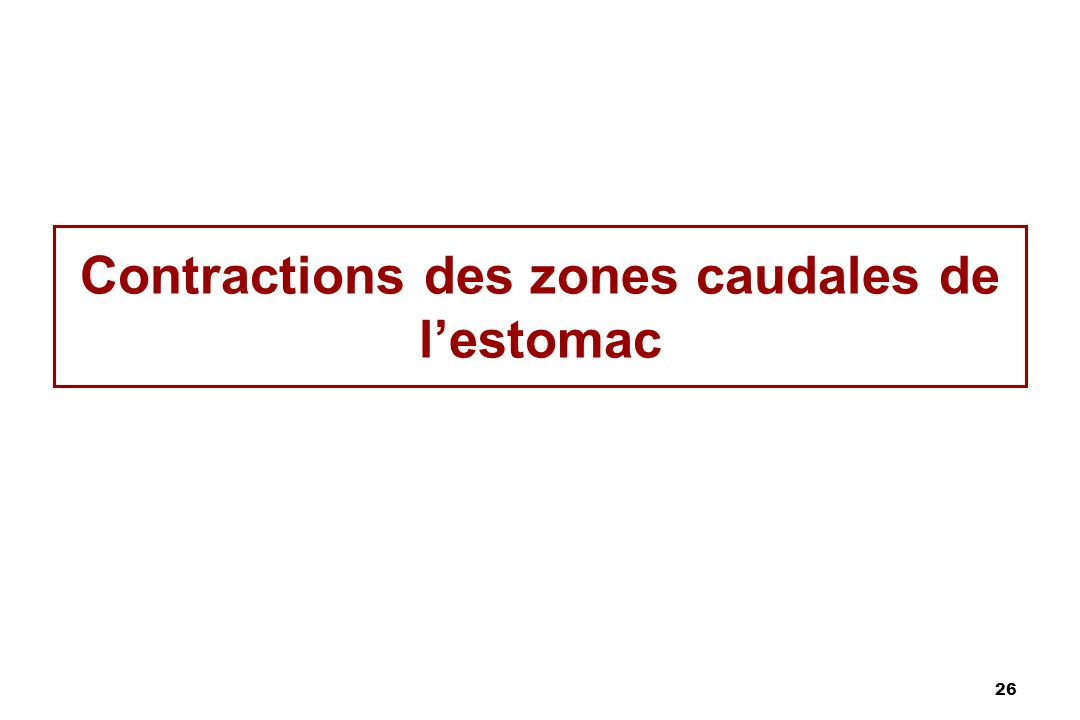 Contractions des zones caudales de l'estomac