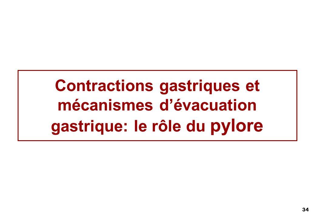 Contractions gastriques et mécanismes d'évacuation gastrique: le rôle du pylore