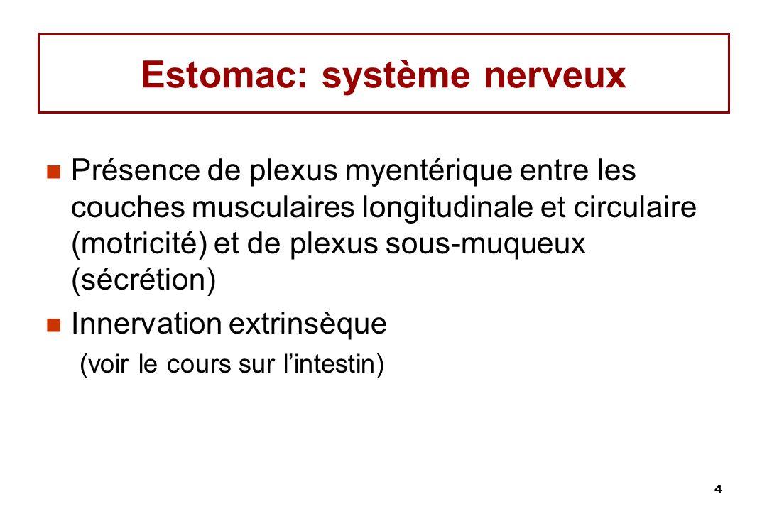 Estomac: système nerveux