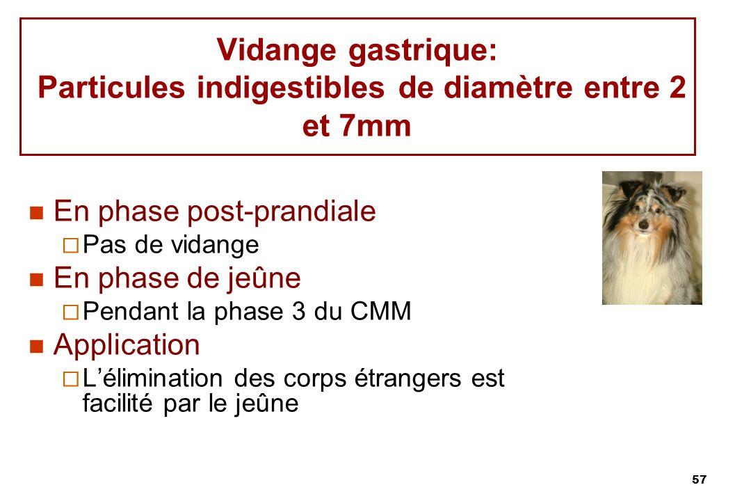 Vidange gastrique: Particules indigestibles de diamètre entre 2 et 7mm