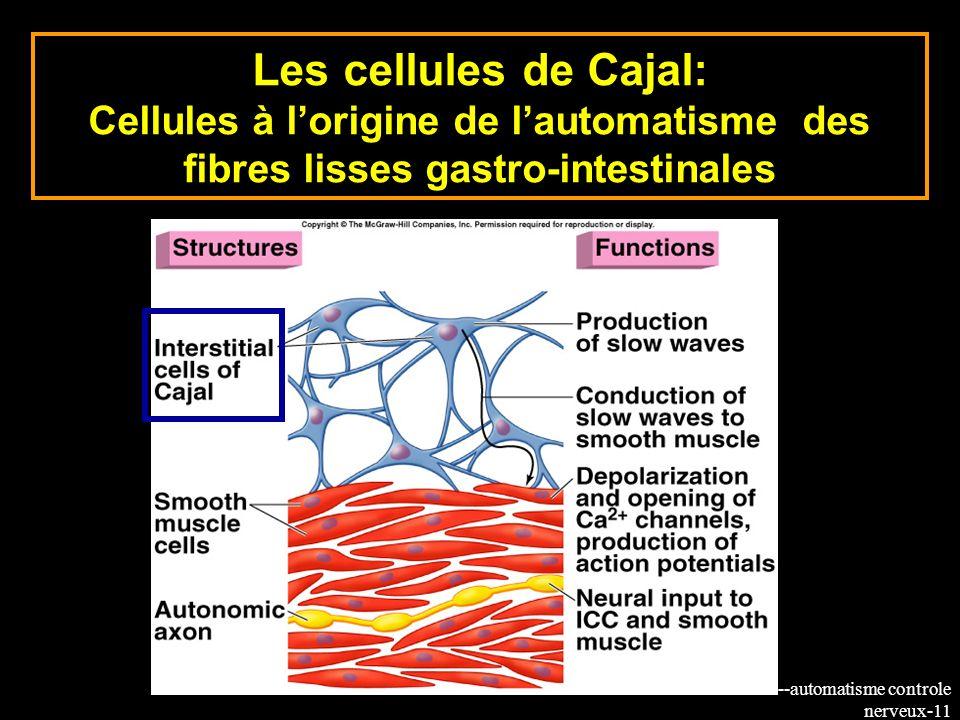 Les cellules de Cajal: Cellules à l'origine de l'automatisme des fibres lisses gastro-intestinales